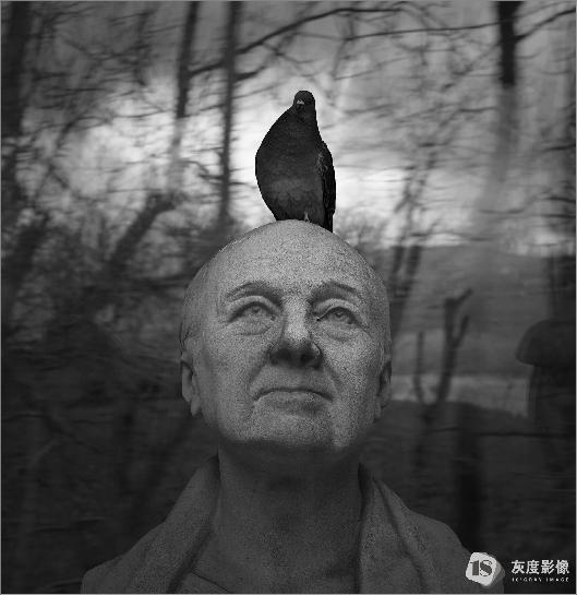 鸽子 pigeon 万毅/YI WAN