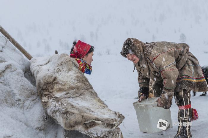 涅涅茨人营地  The Nenets campsite 叶丹蕾/DANLEI YE